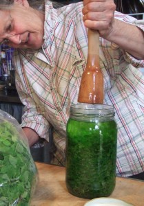 Barbara Rose of Bean Tree Farm tincturing fresh desert chickweed from Greens Goddess Spring gardens.